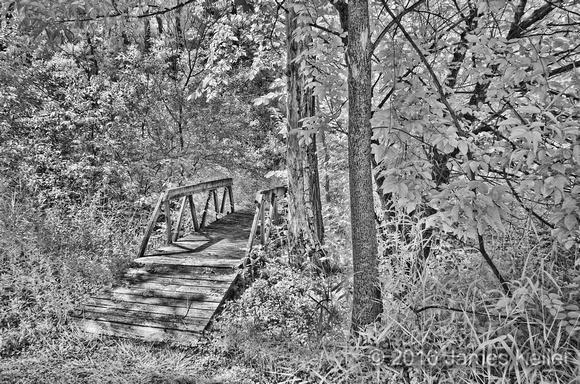 IR Kinawa Woods 3