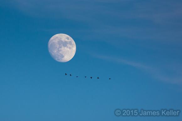 Moon & Canada Geese